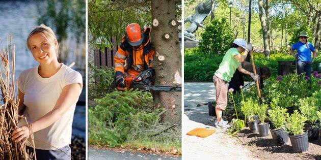 Regeringens satsning: 270 miljoner till enkla gröna jobb