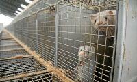 Norska pälsproducenter får full ersättning