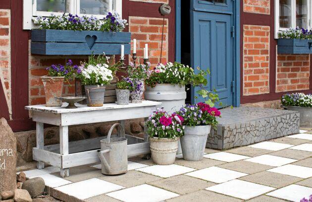 Udda blir jämnt! Loppisfyndade krukor med sommarblommor samlade på och runt en enkel träbänk – vips blommar det härligt intill entrén.