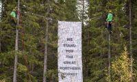 Aktion i skog mot avverkning