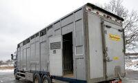 Ökad press på bättre djurtransporter