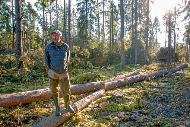 2010 fick Håkan Alfredsson från Bohuslän se till att vindfällena på hans skogsfastighet i Madona, Lettland, togs om hand. Sedan dess har det blivit allt svårare att få personal till manuellt skogsarbete. (Arkivbild)