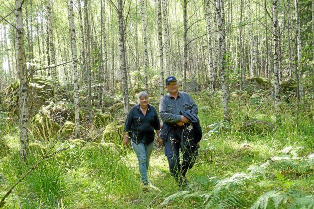 Ylwa och Kjell Sjelin går mot strömmen – och använder också grisar som markberedare för att få upp en tät skog.