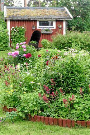 Pioner och alunrötter odlas närmast, med aklejor, samt rosa pioner och rosa rosenkrage bakom.