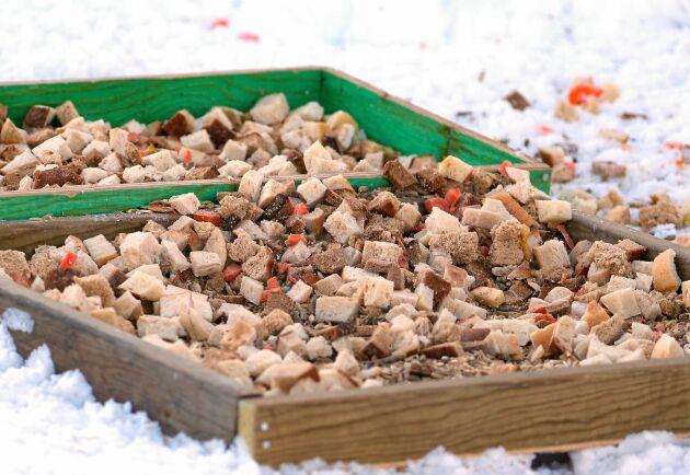 Rådjuren får en blandning av bröd, morötter, äpplen och päron som toppas med viltfoder.