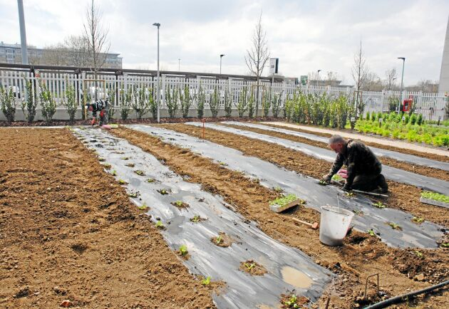 I grönsakslanden odlas många olika typer av växter, för att besökarna ska få se hur de ser ut och vilka system som används.