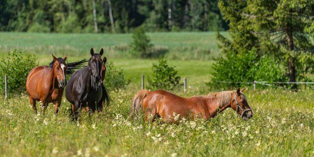Hästnäringen omsätter över 30 miljarder