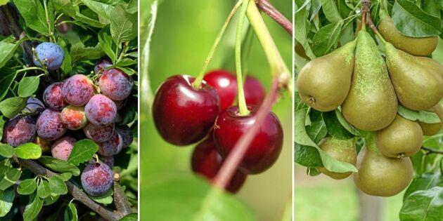 Frukt och bär - 8 fina sorter att plantera