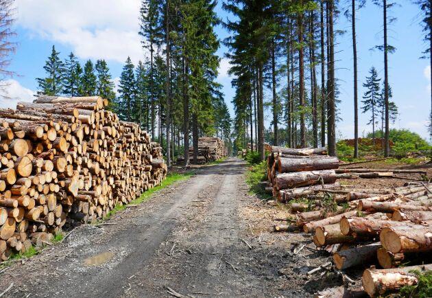 70 miljoner kubikmeter skadat virke tas ut från de tjeckiska skogarna.