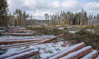 """""""Dagens skogsbruk är inte hållbart"""""""