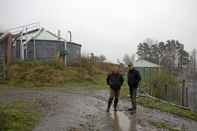 Biogasanläggningen som rötar gödsel från Dan Waldemarssons tjurar ger inte bara el till gården. Överskottsvärmen värmer grannen Marcus Söderlinds växthus.
