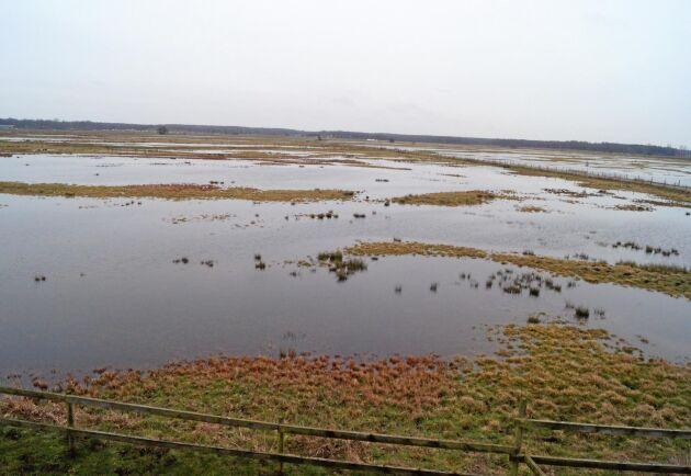 Skötsel av våtmarker, som de här vid Vombsjön i Skåne, är något man kan få miljöersättning för i dag.