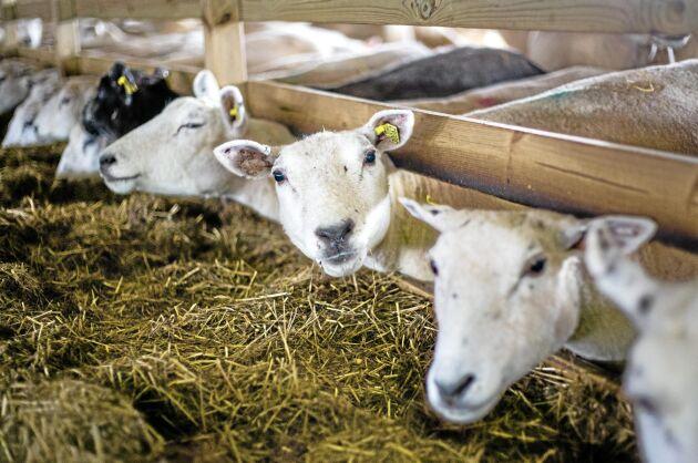 Tangará Farm har försatts i konkurs.