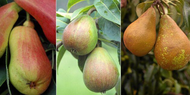 Fina päronsorter för odling i hela landet!