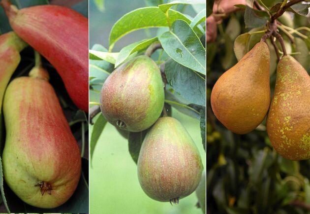Spännande sorter som kan växa i din trädgård.