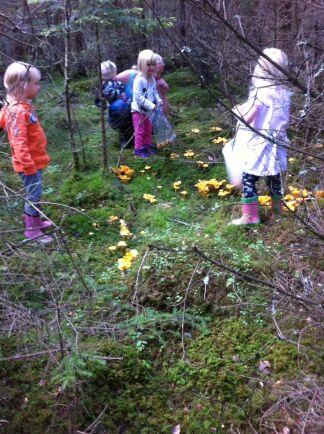 Kantarellplockning i skogen som Jennie och Annika äger.