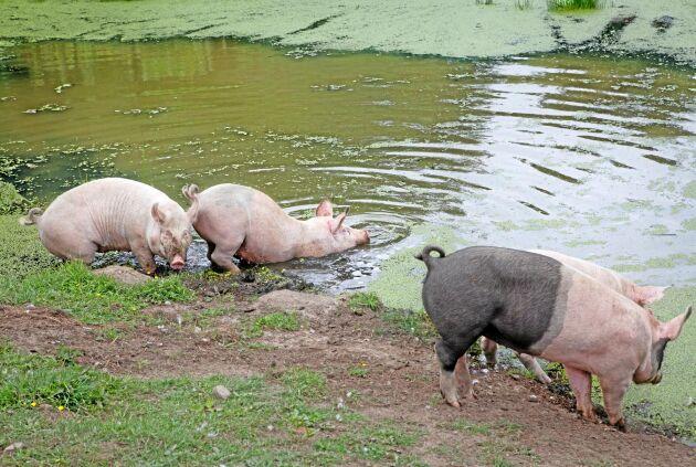 Dammarna erbjuder svalka under varma sommardagar.