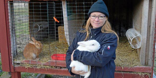 Kaninbonden Malins kampanj ska stötta trakasserade bönder