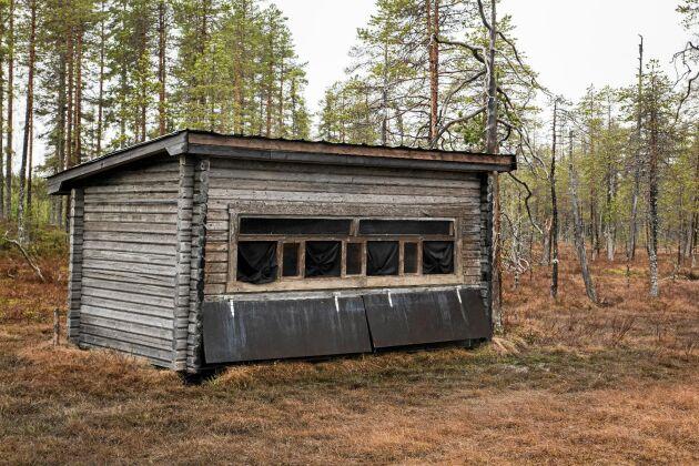 Bert Mårtensson gömsle står intill en myr där åteln ligger med en äldre skog som fond.
