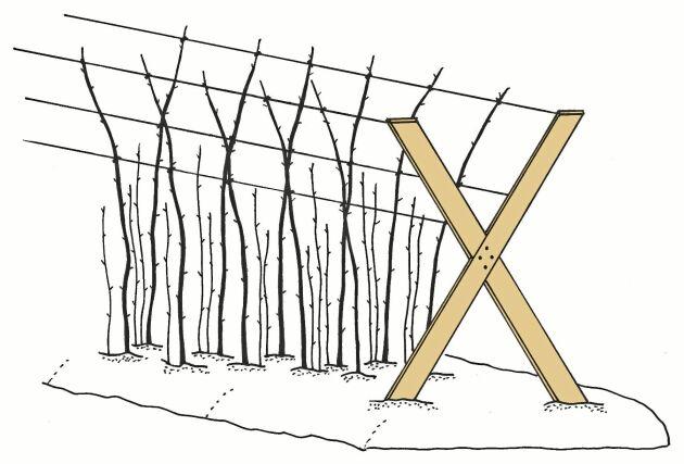 KRYSSAT. X-formen ger plats för fler trådar att binda emot.