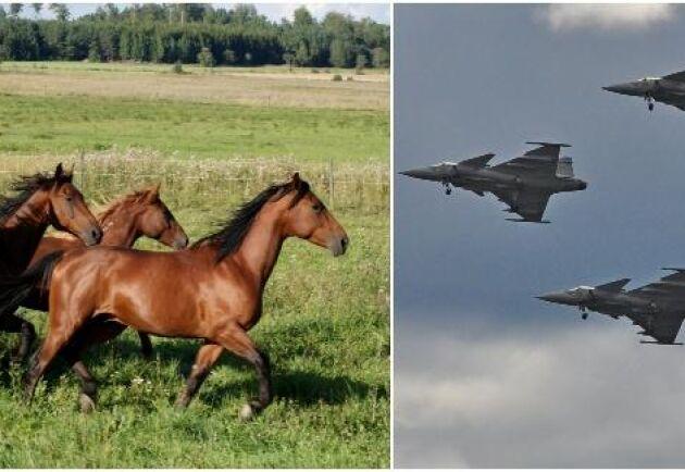 Det kraftiga ljudet har gjort att hästarna blivit mycket skrämda och fem hästar har skadat sina ben. Arkivbilder.