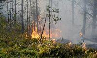 Skogsägare mer medvetna om risker