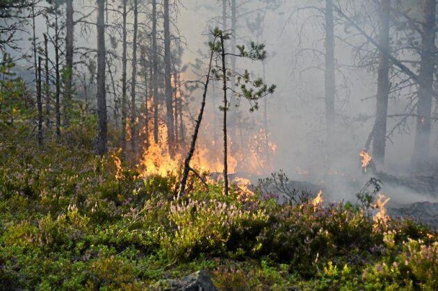 Att försäkra sin skog mot bränder och stormar har blivit vanligare efter stormen Gudrun.