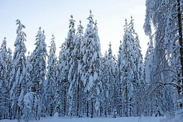 Kan Sveriges skogsägare lita på Miljöpartiet, undrar debattören.