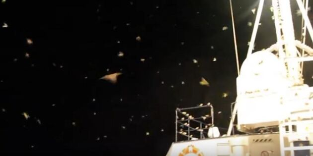 Unika f på flyttfåglar i Östersjön – se dem landa på fartyget!