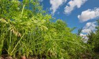Ingen risk för matbrist på ett isolerat Gotland