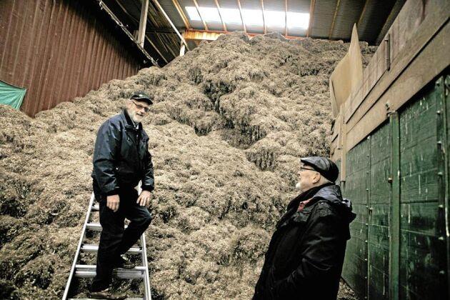 """På vänt. """"Vi har en massa material som ligger och det måste tas om hand innan vi kan odla på nya arealer."""" säger Roger Olofsson, till höger."""