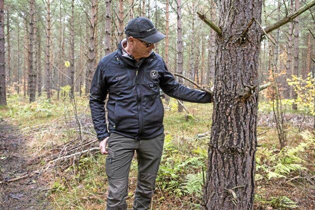 Aska som sprids i skog som ska bli massaved måste återföras senast ett år innan avverkning för att undvika risk för små svarta korn i pappret.