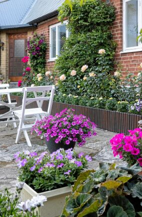 Den stensatta innergårdens är inramad med röda klätterrosor, blåregn och klematis, medan Peace rosor och tagetes ståtar i långa rader. Krukorna fyller Thomas med rikblommande surfinior och petunia.