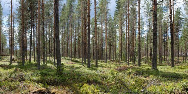 Så ska tillväxten i skogen öka med 20 procent