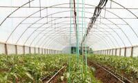 8 hektar växthus för tomater på jordbruksmark