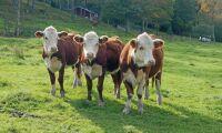 Replik: Nu är det enklare att certifiera naturbeteskött