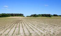 Så vill bankerna underlätta för torkdrabbade bönder