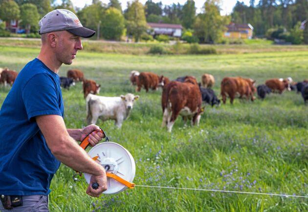 Martin Sylwan på Över-Aspa gård utanför Nyköping flyttar sina betesdjur varje dag.