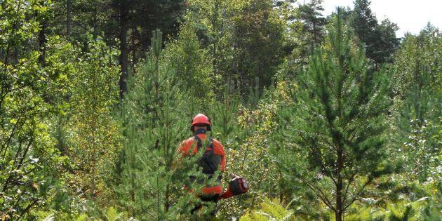 """""""Byråkratprocenten är viktigast för Skogsstyrelsen"""""""
