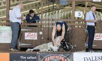 Nytt världsrekord i fårklippning