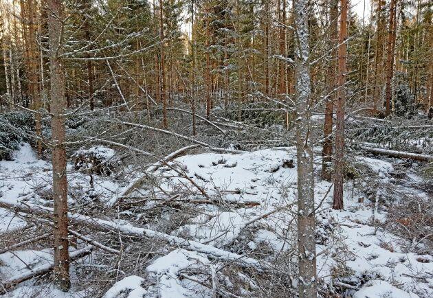 Stormskador efter stormen Alfrida i uppländska Hargs bruks skogar.