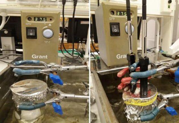 Gas från ägget samlas in i glasbägare och gasen från ägget överförs till två fibrer som sedan injiceras I GC-MS utrustningen.