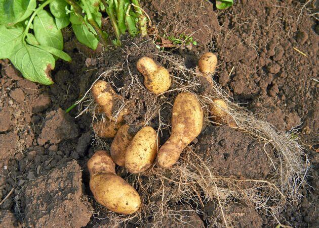 – Regeringen prioriterar en rättvis fördelning som ger största möjliga nytta och en snabb utbetalning, säger landsbygdsminister Jennie Nilsson (S) om krisstödet till bland annat potatis- och betodlare.