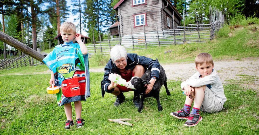 Farmor Gunilla flaskmatar ett lamm tillsammans med barnbarnen Sid och Bo.