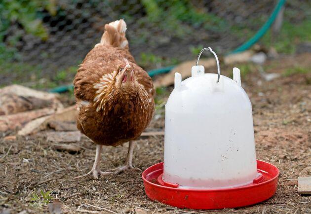 Friskt vatten utan smuts. Dessutom räcker vattnet länge när hela automaten fyllts på.