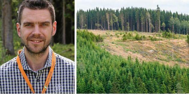 Utländsk arbetskraft flyr jobbet i skogen