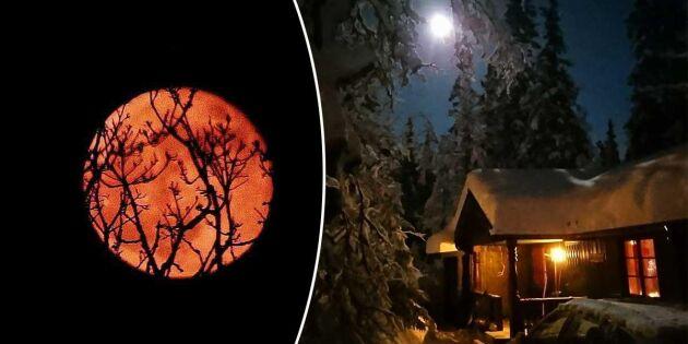 Bildextra: Se Landläsarnas vackra bilder på supermånen