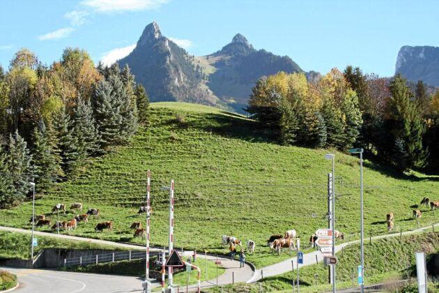 Småskaligt, bergigt och tätt mellan gårdarna, Schweiz har lönsamma gårdar med 22 kor i genomsnitt. Överallt syns kor på bete och gräset växer långt in på hösten.