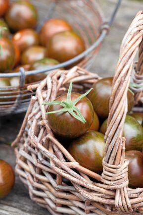 'Tiger' vann Nelson Gardens eget smaktest med 30 tomatsorter. Kan med sitt kraftiga fruktkött och tjocka skal förvaras länge på köksbänken. Så inomhus i mars-april. Nelson Garden.