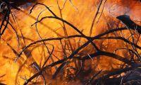 Känsligt läge i brandhärjade områden